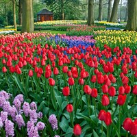 Dutch Bulbfields, The Hague & Amsterdam